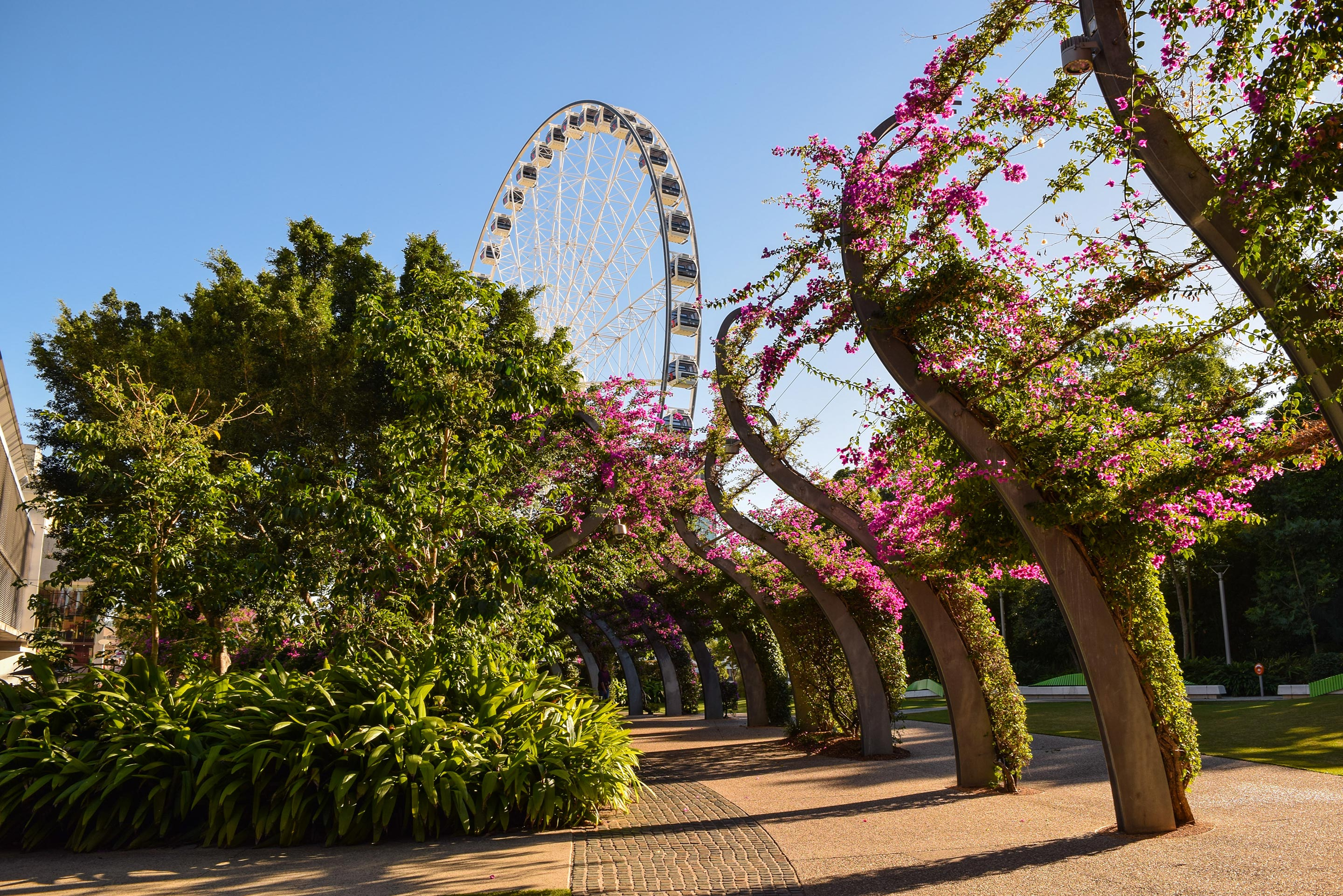 View of the South Bank ferris wheel in Brisbane, Australia