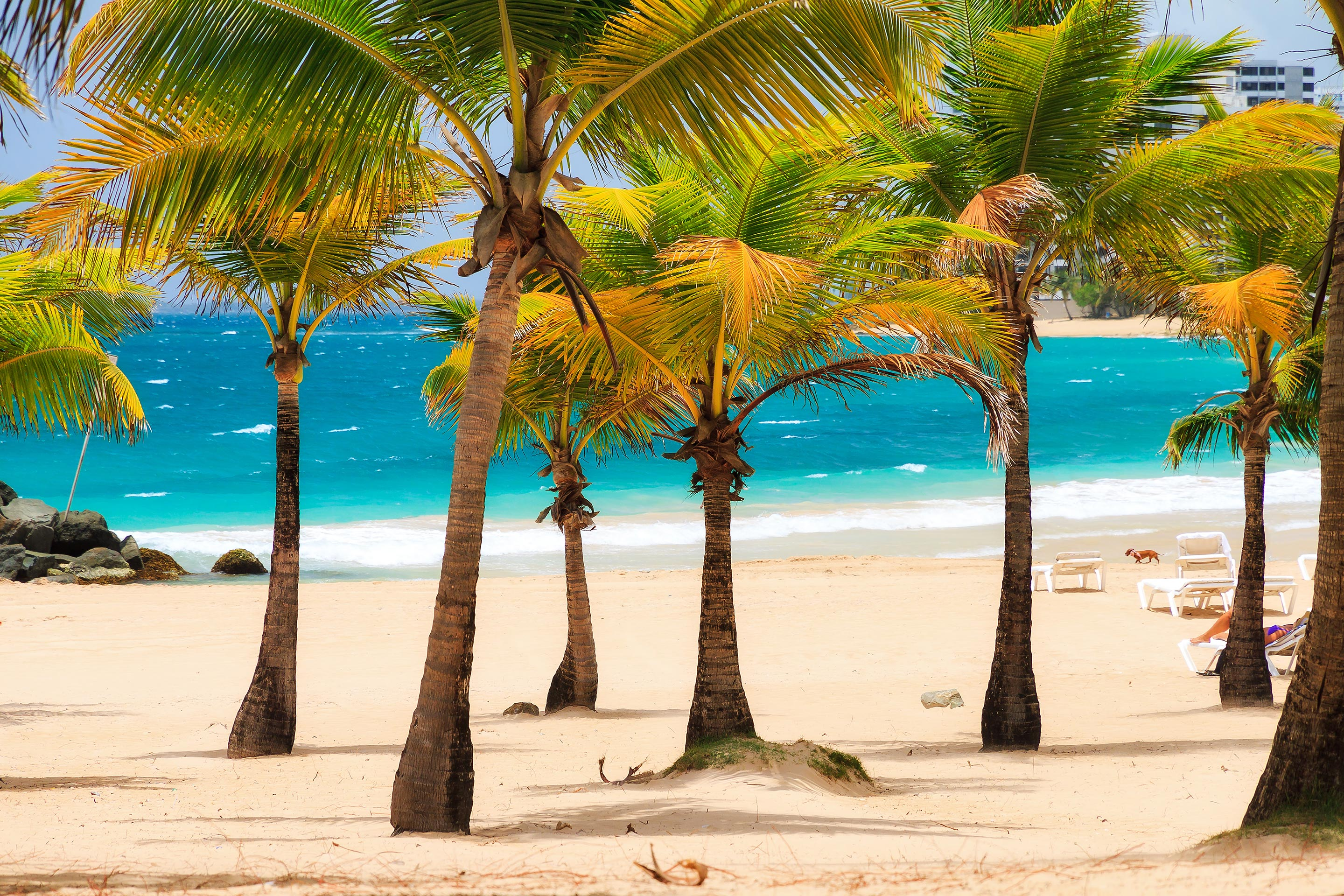 Southern Caribbean Beach with Palm Trees.