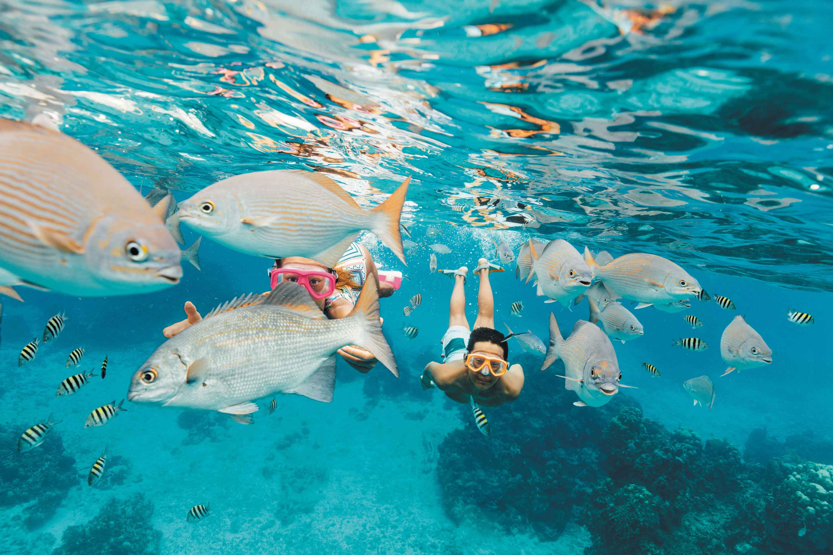 Two people snorkeling in Cozumel, Mexico