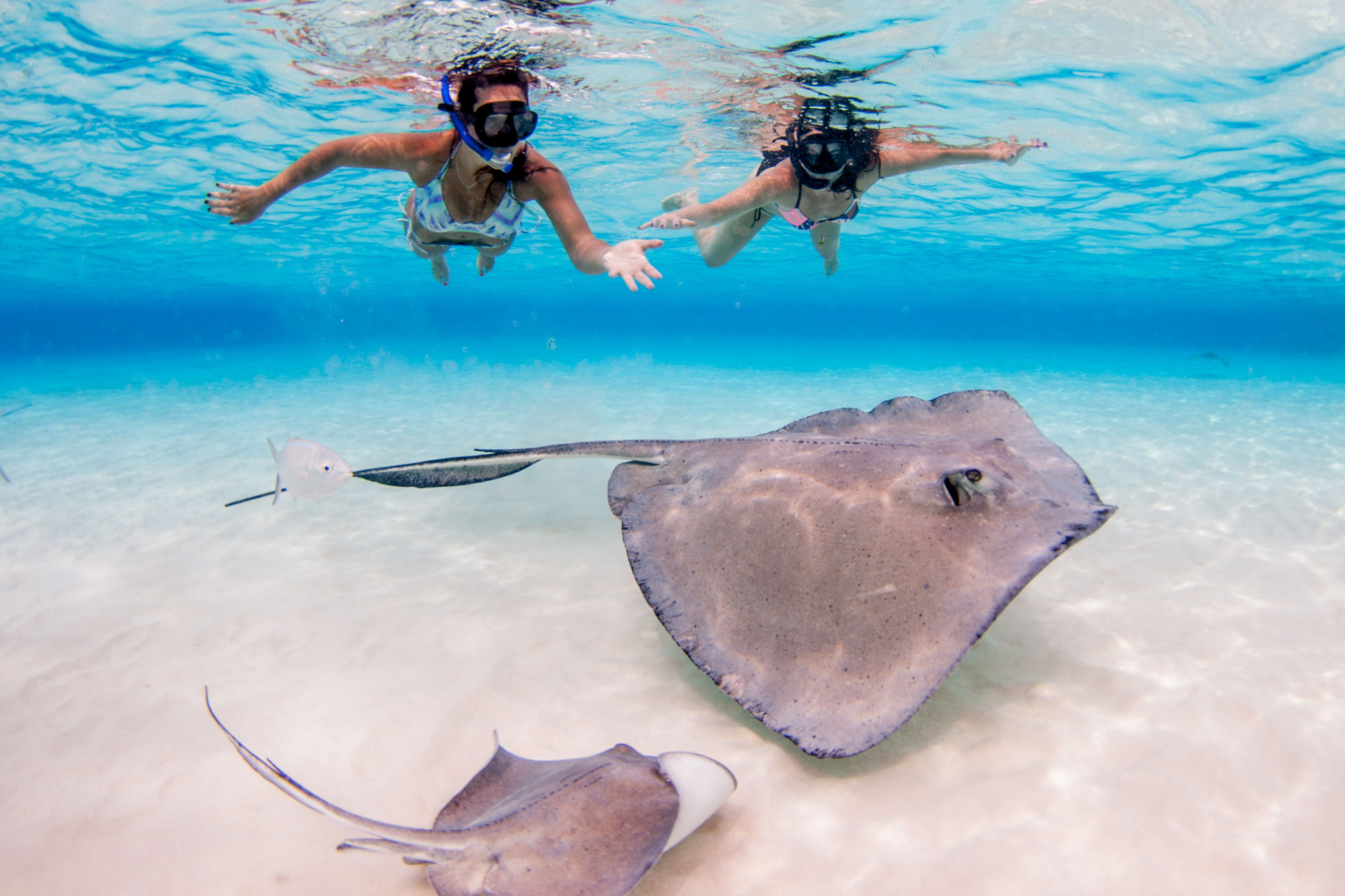Two women swimming with stingrays in Grand Cayman