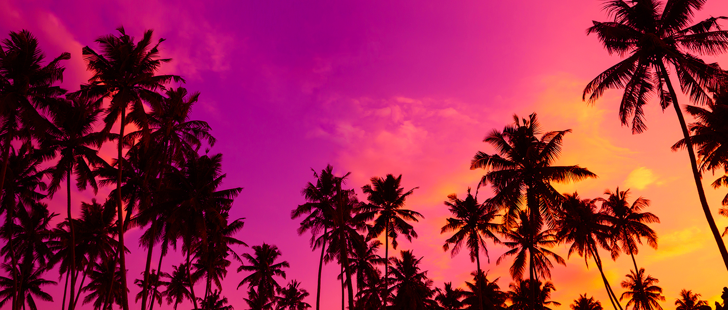 sunset palm trees deals