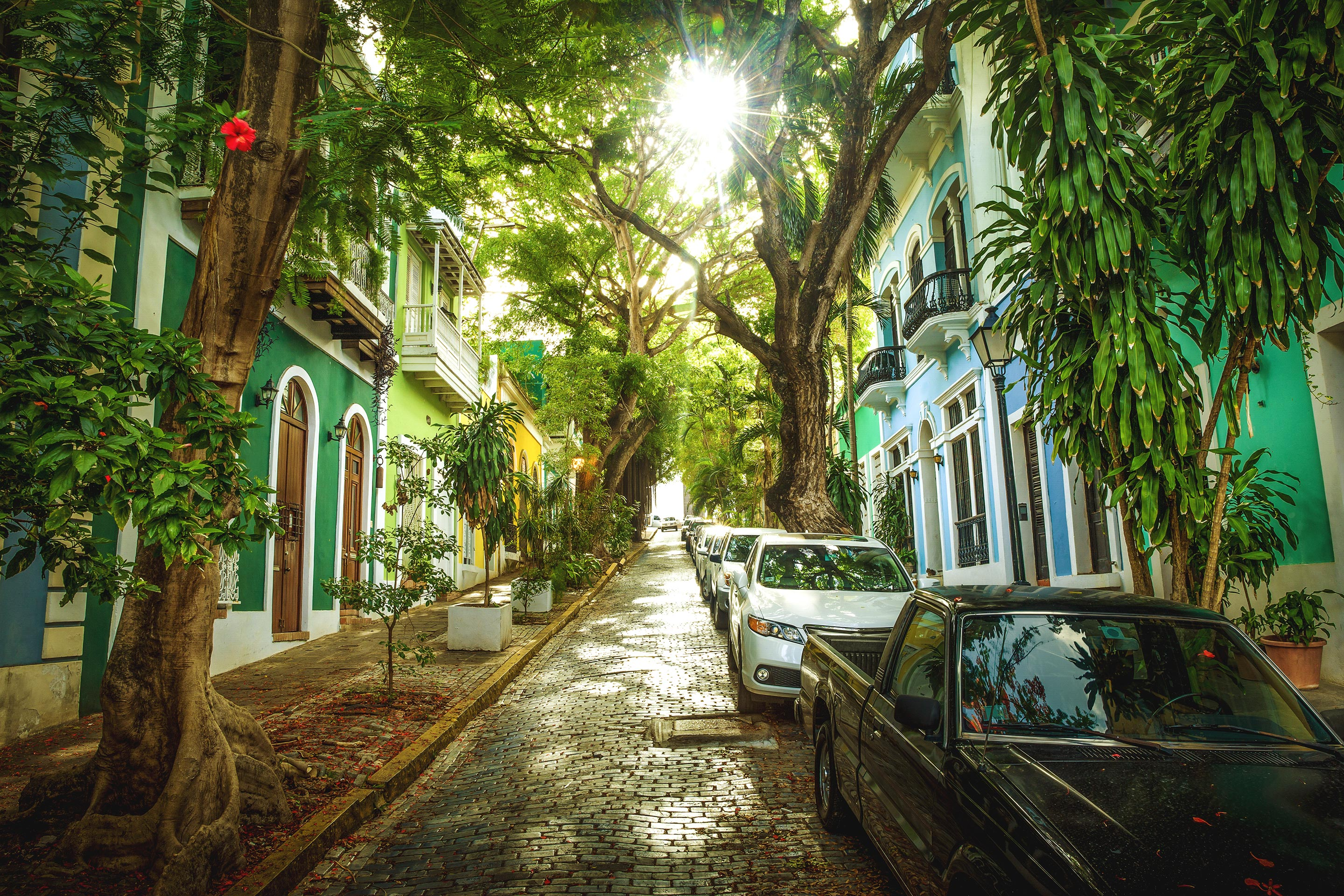 Luscious trees and the colorful streets of Old San Juan, Puerto Rico